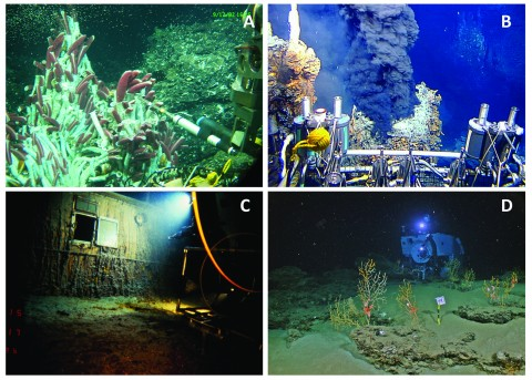Fig. 2. Seafloor exploration with Alvin. (a) Using a probe among tubeworms at a hydrothermal vent at the East Pacific Rise. (b) Preparing to sample a black smoker hydrothermal vent at the East Pacific Rise. (c) Shining a light onto a deck bulkhead porthole of Titanic. (d) Investigating the effect of the Deepwater Horizon oil spill on benthic communities in the Gulf of Mexico. (Photos courtesy of WHOI Archives (Figures 2a–2c) and C. Fisher, T. Shank, D. Fornari, and the WHOI Multidisciplinary Instrumentation in Support of Oceanography (MISO) facility (Figure 2d).)