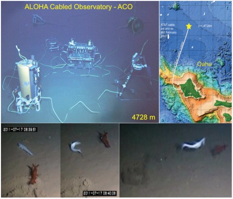 "Fig. 1. (top right) The ALOHA Cabled Observatory (ACO) is at Station ALOHA (A Long-Term Oligotrophic Habitat Assessment; 22°45'N, 158°W, 4728-meter water depth), north of Oahu, Hawaii. (top left) Shown are the main ""node"" with acoustic Doppler current profilers and conductivity-­temperature sensor, camera, and lights (right); secondary node with conductivity-­temperature-­depth-­oxygen sensor and fluorometer sensors (left); junction box with hydrophone and pressure (just left of node); and (pasted in the background) the cable termination (left) and thermistor array/acoustic modem (right). (bottom) The video frames show a lizard fish attacking an aristeid shrimp, a rare event lasting about 1 second."