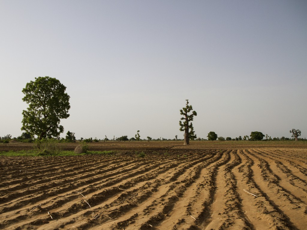Climate, Land Use, and Conflict in Northern Africa - Eos