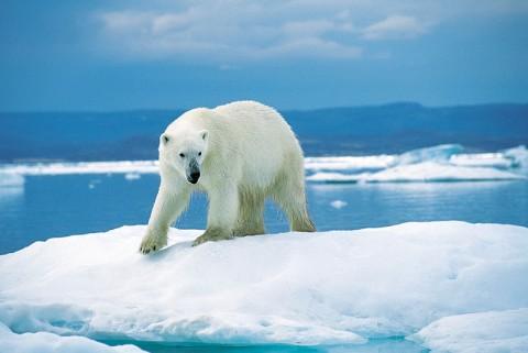 Arctic_embed