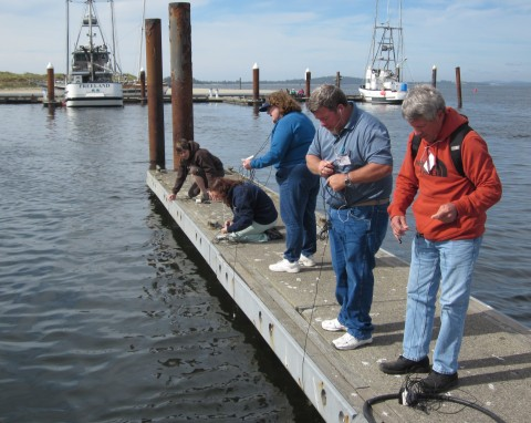 Fig. 1. Community college faculty testing underwater microphones (hydrophones) that they constructed during a Centers for Ocean Science Education Excellence (COSEE) sponsored workshop held at the Oregon Institute of Marine Biology. Credit: Janet Hodder
