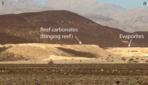 Fig. 2. Fringing coralgal reef deposits overlain by evaporites. Photo: Fribourg University