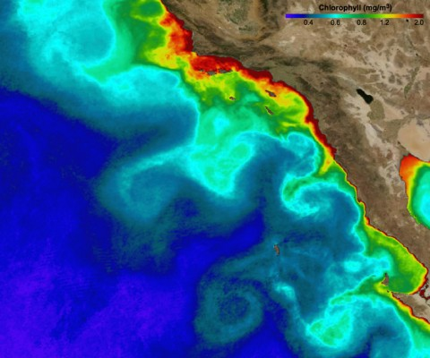 Chlorophyll concentrations off the southern California/Baja coast in September 2003, showing eddies that transport sardine larvae away from the coast. Credit: Karen Nieto/MODIS Aqua