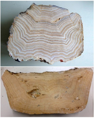 Two samples of sinter from Roman aqueducts, showing distinct banded layers. These layers typically represent seasonal cycles. Credit: Cees Passchier