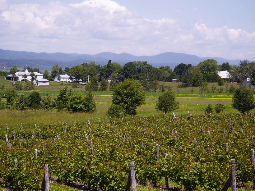 A vineyard in Sainte-Pétronille, Quebec. Credit: James Bailey, CC BY-NC-SA