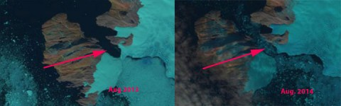Ice bridges that linked Greenland's coastal islands to the mainland are disappearing, as Mauri Pelto shows in a recent post to From A Glacier's Perspective. These two Landsat images from 2013 and 2014 show Cape Seddon/Tugtuligssup Sarqardlerssuua separating from Steenstrup Glacier. Credit: USGS