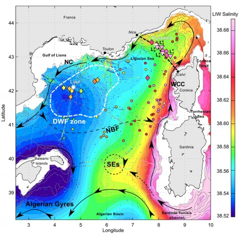 Water salinity levels about 500 meters below the surface off the coast of Sardinia and Corsica show the dynamics of submesoscale coherent vortices in the northwestern Mediterranean Sea. DWF, Deep Water Formation; LIW, Levantine Intermediate Water; NBF, North-Balearic Front; NC, Northern Current; SEs, Sardinian Eddies; WCC, Western Corsica Current. Credit: Bosse, et al., Journal of Geophysical Research: Oceans