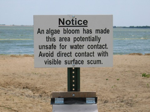 Fig. 2. Beach notice sign warns recreational users to avoid direct contact with cyanobacteria. Credit: Jennifer Graham, USGS