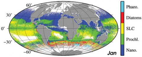 Climatology for the month of January (Sea-viewing Wide Field-of-view Sensor data, 1998–2010) of the dominant phytoplankton groups (Phaeocystis-like diatoms, Synechococcus-like cyanobacteria, Prochlorococcus, and nano-eukaryotes). Improved phytoplankton functional type algorithms are anticipated from the next generation of hyperspectral OC satellites. Credit: IOCCG Report 15