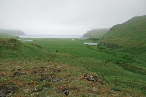 Geologists also discovered six extensive sand sheets that blanketed the coastal plain separating the logs from the shoreline. The sheets contain sand from nearshore marine environments transported inland by six large tsunamis in the past 1700 years, including the 1957 tsunami. Carbon-14 age estimates for the sand sheets indicate that Stardust Bay has been hit by large tsunamis every 300–340 years, on average. Credit: Robert Witter