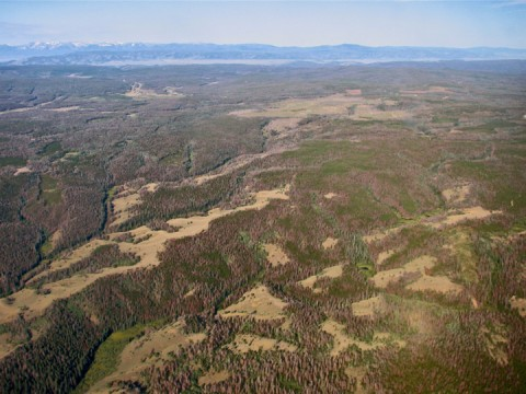 Billions of trees have died across western North America in a decade-long bark beetle epidemic. Researchers are trying to learn how forest die-off impacts water supplies. Credit: Juan Fernandez, NCALM