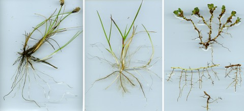 diversity in plant traits growing in the arctic