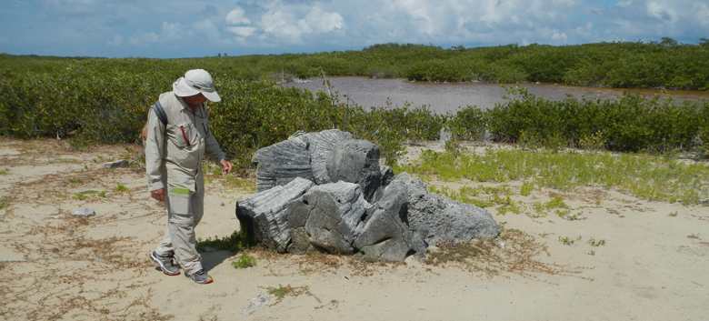 stray coral boulder was likely transported 230 meters inland by large waves or currents along the Atlantic shore of Anegada, British Virgin Islands.