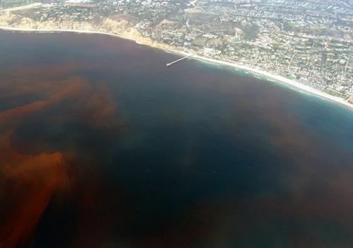 Red tide near Scripps pier in La Jolla
