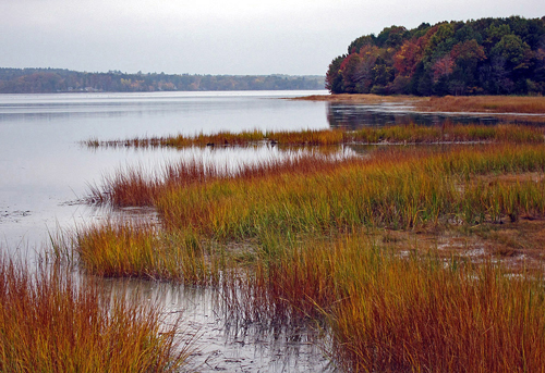A saltwater marsh in Great Bay National Wildlife Refuge, Massachusetts.