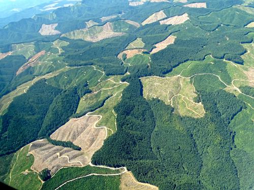 Unpaved roads in Oregon wiggle through forestland harvested by the timber industry.