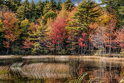 Marsh at Acadia National Park's Eagle Lake