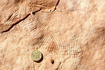 "ancient microbial mats could have produced the ""elephant skin"" texture on this rock surface"