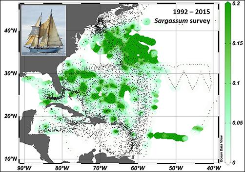 Annual Sargassum surveys by the Sea Education Association on board the SSV Corwith Cramer