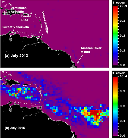 Sargassum cover in the Atlantic and Caribbean determined from satellite observations