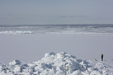 Local Iñupiat hunter looks at drifting sea ice near the edge of shorefast ice at Barrow, Alaska.