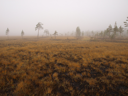 atmospheric-carbon-absorbed-by-peatlands-exported-by-streams