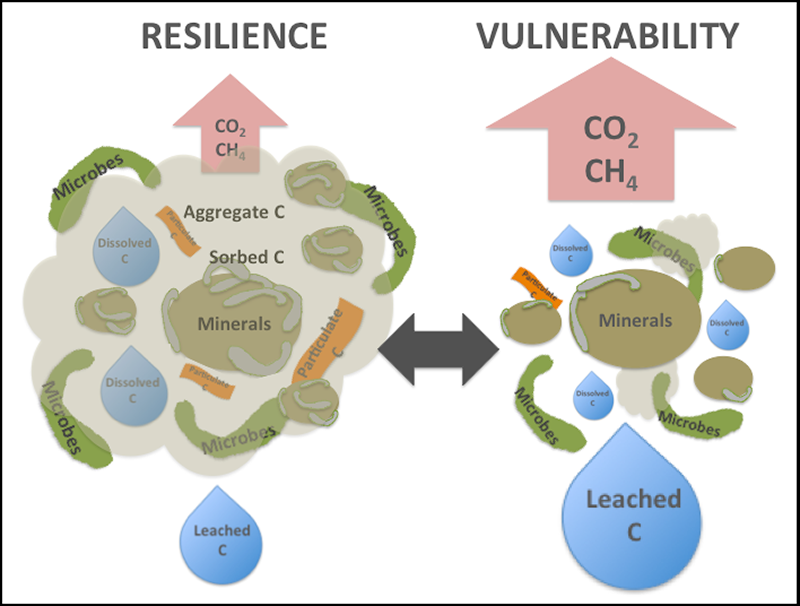 Several environmental factors promote soil carbon resilience or increase its vulnerability to carbon loss.