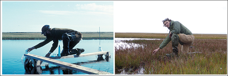Biomass has increased significantly in Arctic tundra ponds between the 1970s and today