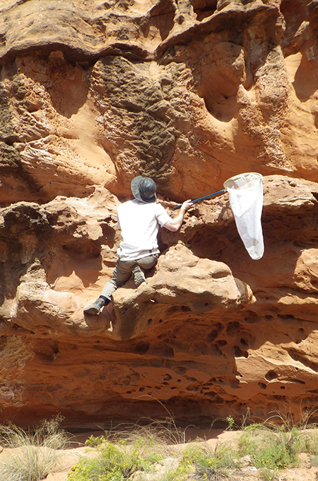 Researcher scales sandstone wall.