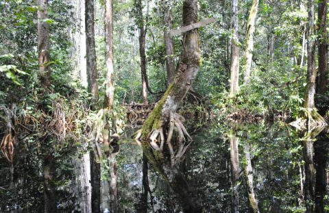 congo-swamp-1-sized
