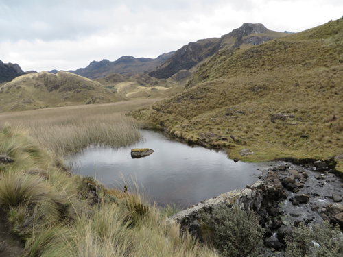 The Andean Páramo zone is a vital source of water for Andean countries.