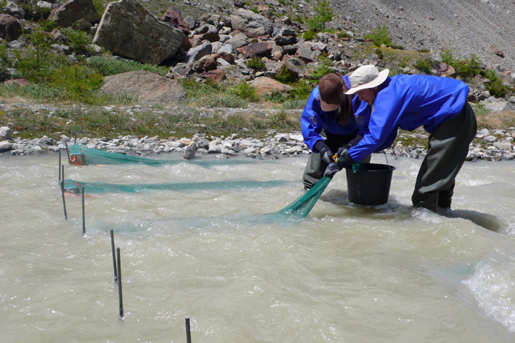 Bedload traps offer insight into the movement of debris through steep streams.