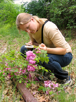 A college student records the flowering time of bristly locust.