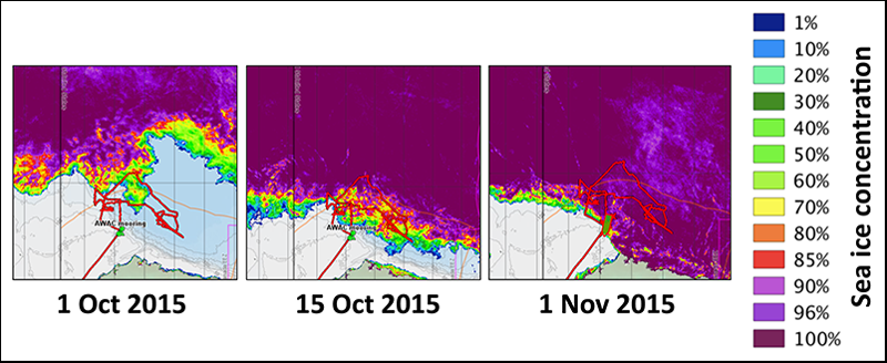 Ship track, bathymetry, and satellite-based ice concentrations showing the recovery of sea ice during October 2015.