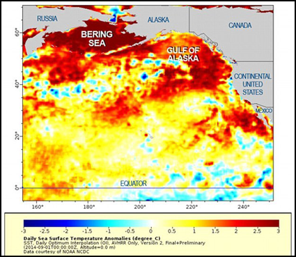 """A large mass of relatively warm water in the Pacific Ocean, nicknamed """"the blob."""""""
