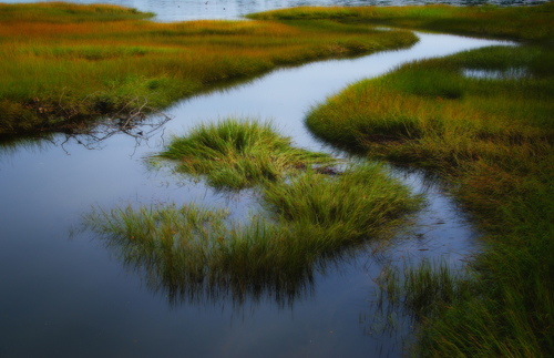 A tidal marsh on the East Coast of the United States.