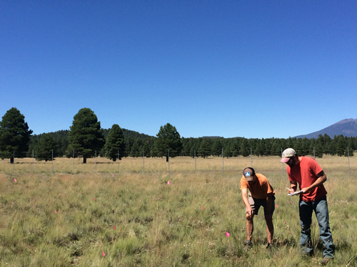 Scientists measure plant community composition through a project designed to monitor drought effects on ecosystems.