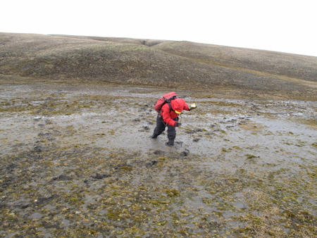 A scientist attempts to pull herself from knee-high mud.