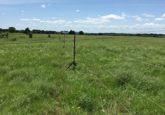 Researchers use fiber optic cables to improve observations of atmospheric heat, water vapor, and carbon exchanges with the Earth's surface