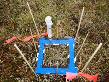 A new study unravels how three Arctic plant species cycle nitrogen.