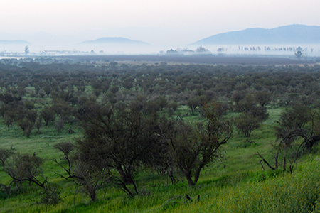 A habitat used as pasture for animals in central Chile.