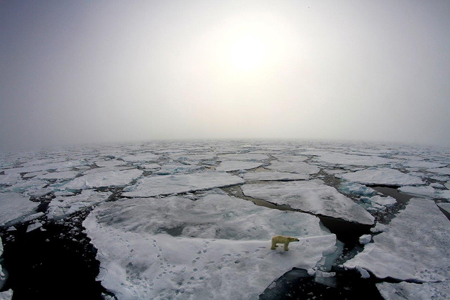 Scientists on the N-ICE2015 campaign spot a polar bear wandering the thinning sea ice in the spring of 2015.