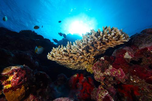 National Marine Sanctuary of American Samoa
