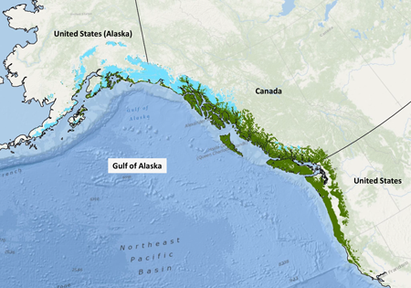 The north Pacific coastal temperate rain forest, constrained by glaciers and ice fields.
