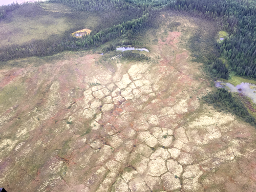 Ice wedge polygons in Arctic tundra.