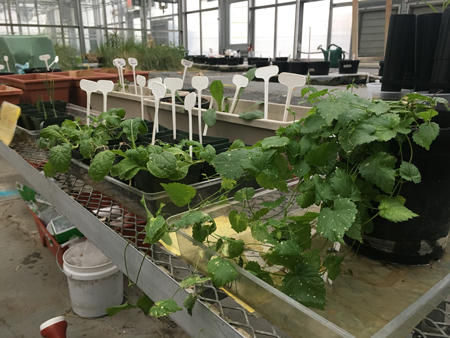 Vegetables, herbs, and salad greens grown in a Martian soil simulant by Villanova undergraduate students.