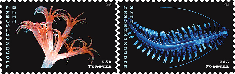 Bioluminescent USPS stamps featuring (left) a sea pen and (right) a marine worm