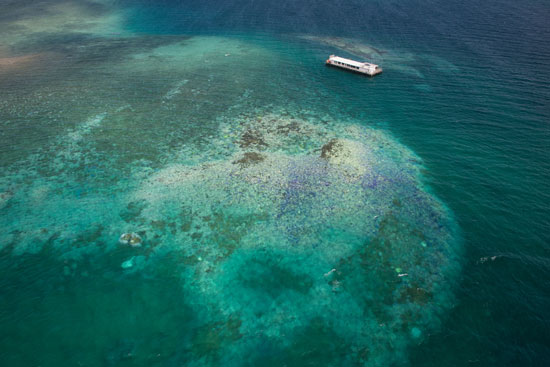 The committee is looking into potential ecological, genetic, and engineering interventions to help coral reefs. This aerial photo shows coral bleaching in March 2016 in New Caledonia, a French territory in the South Pacific