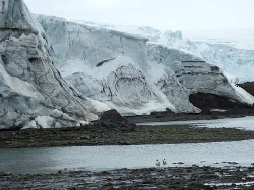 Antarctic glaciers and penguins