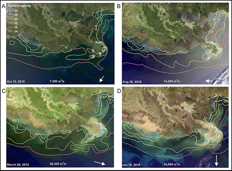 MODIS images showing the Mississippi River plume and Louisiana's shelf during periods of low, medium, and high discharge.